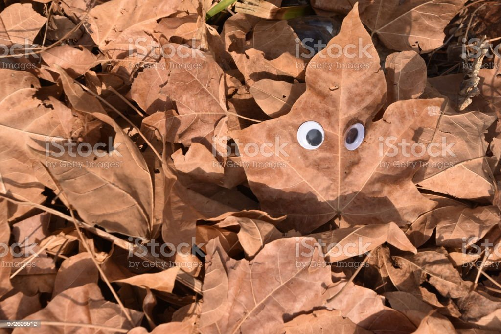 Leaves with eyes stock photo