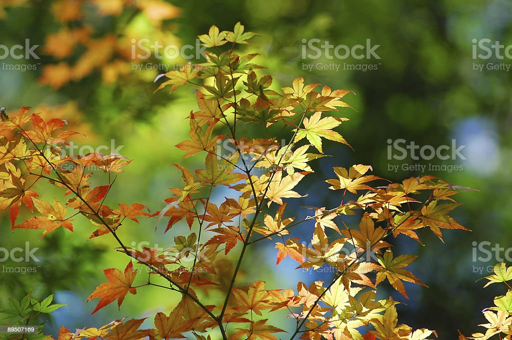 Leaves with sunshine royalty-free stock photo