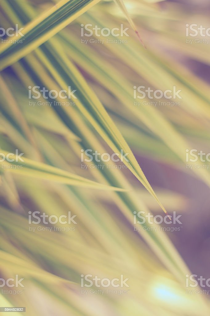 Leaves yellowish green close up background, Plant background stock photo