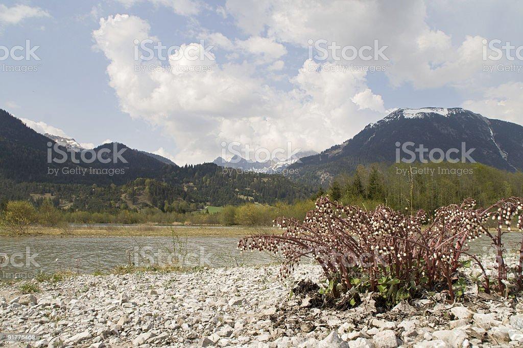 lech river stock photo