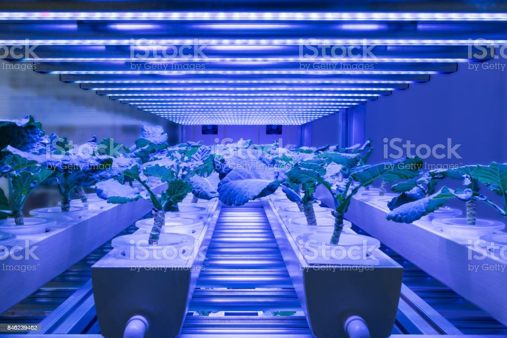 led agriculture stock photo