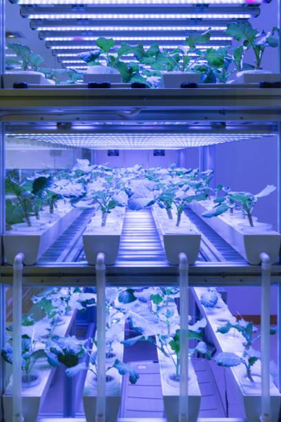 agricultura conduzida - vertical - fotografias e filmes do acervo