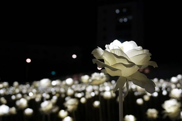 led light roses - artificial reef stock pictures, royalty-free photos & images