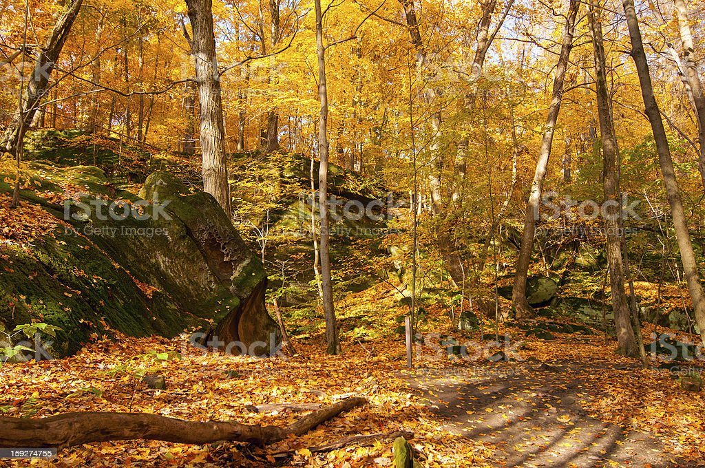 Ledges in a golden wood royalty-free stock photo