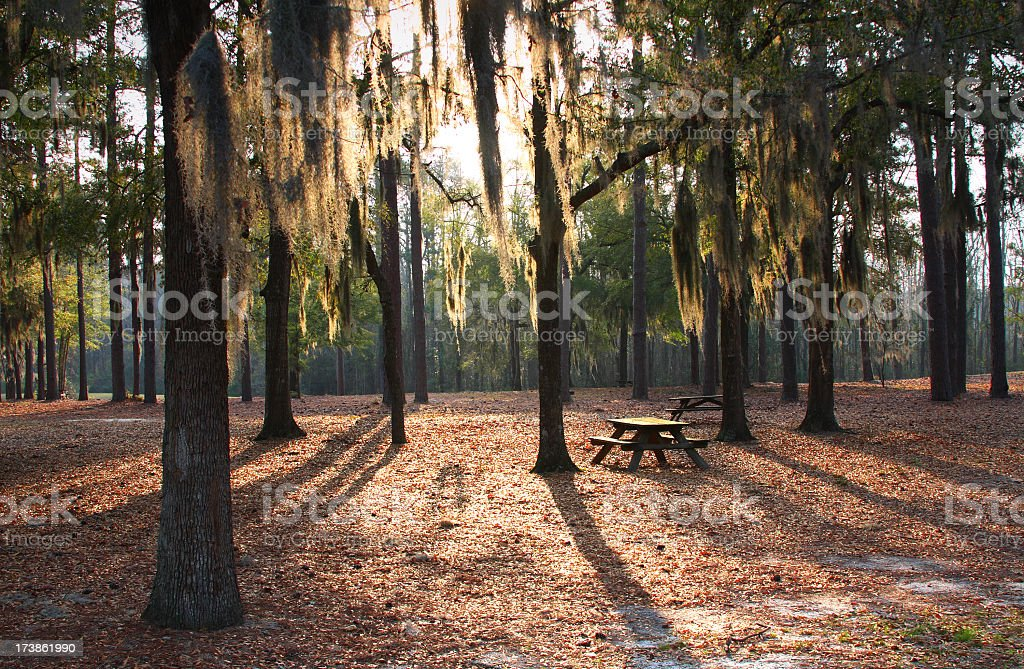 Lee State Natural Area royalty-free stock photo