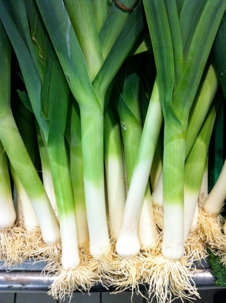 Leeks Close-up on leeks leek stock pictures, royalty-free photos & images