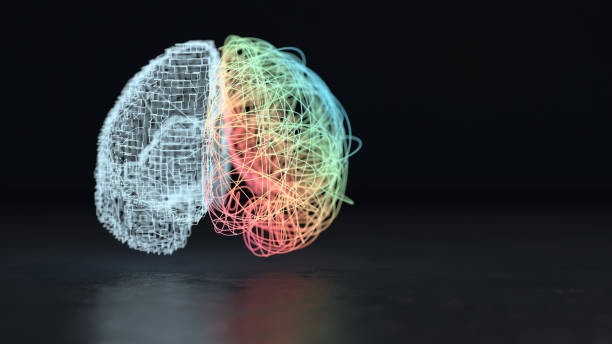 Left and right brain hemisphere 3d render of the creative right and analytical left brain hemisphere neuroscience abstract stock pictures, royalty-free photos & images