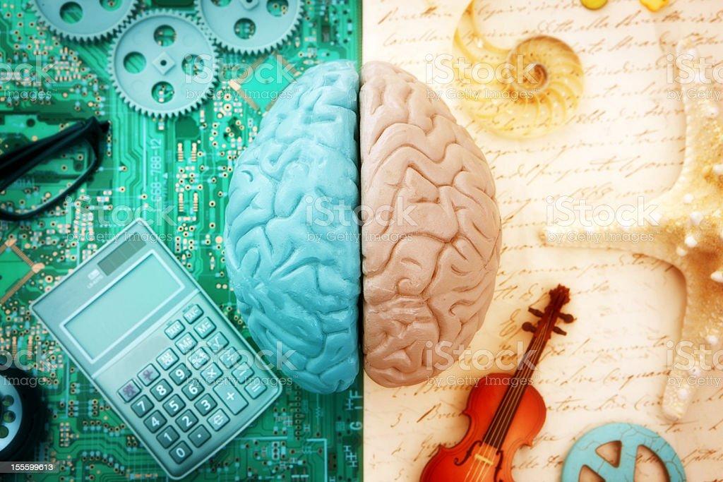 Links und rechts Gehirn – Foto