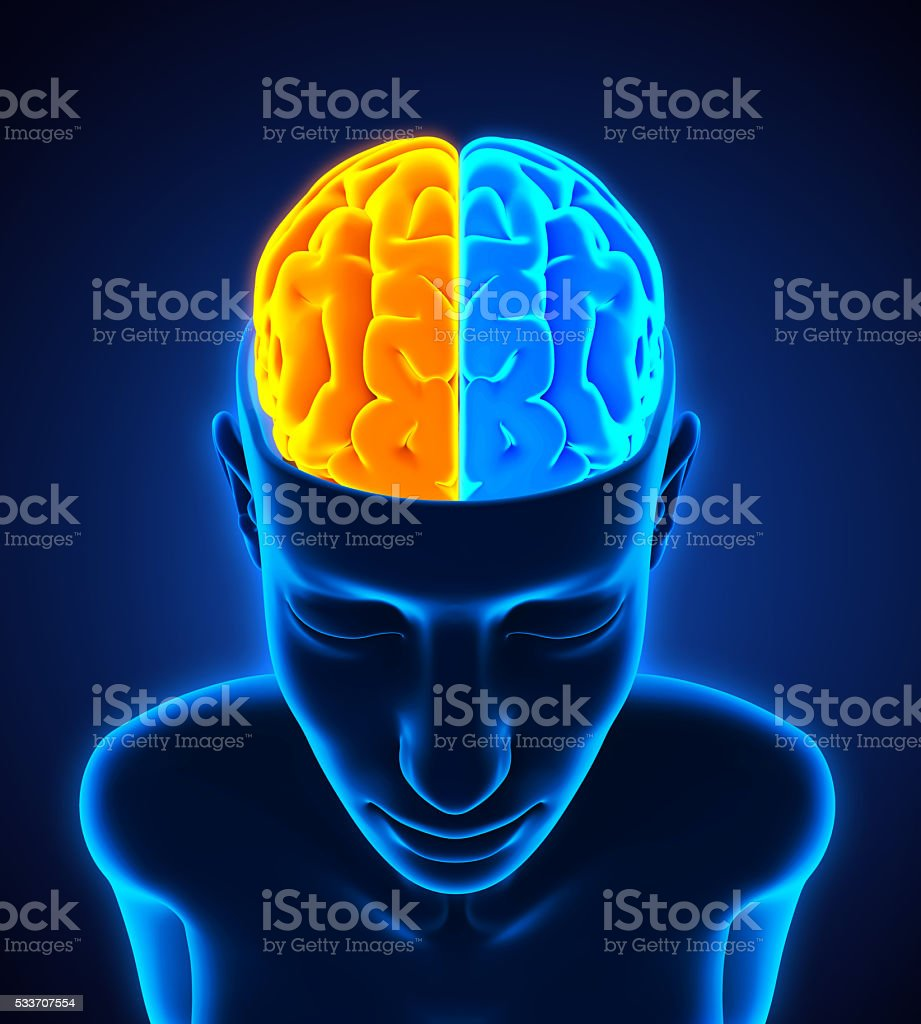 Left and right human brain anatomy stock photo more pictures of left and right human brain anatomy royalty free stock photo ccuart Gallery