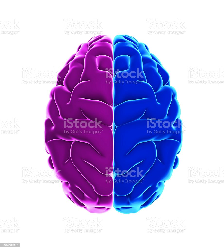 Left and right human brain anatomy stock photo istock left and right human brain anatomy royalty free stock photo ccuart Gallery