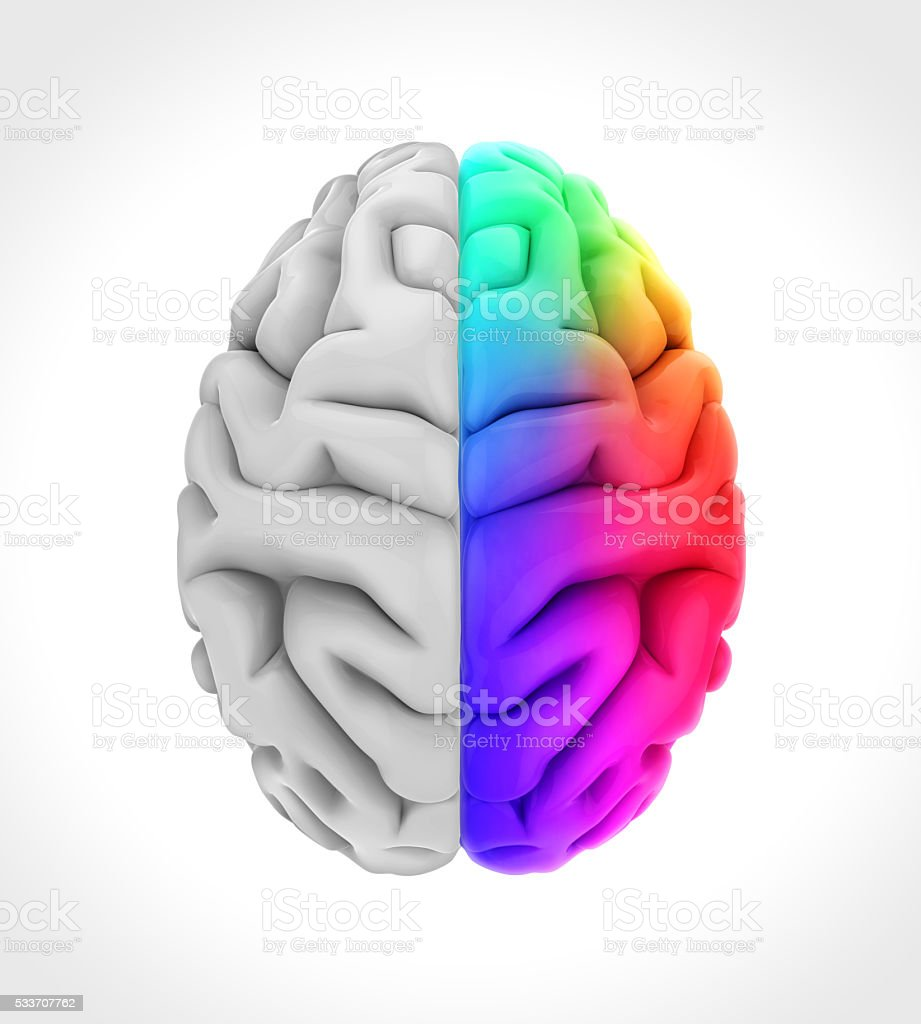 Left And Right Human Brain Anatomy Stock Photo & More Pictures of ...