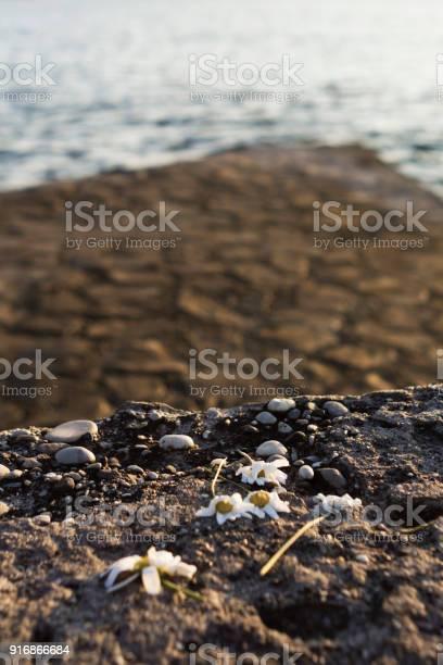 Left behind and steppedon flowers on cobblestone near sea picture id916866684?b=1&k=6&m=916866684&s=612x612&h=nmzkpoh6kuf9p9 jlvhd6dp 30u4svpmdtaftwkylag=