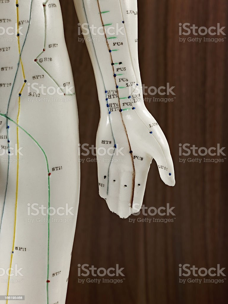 left hand of a medical doll royalty-free stock photo
