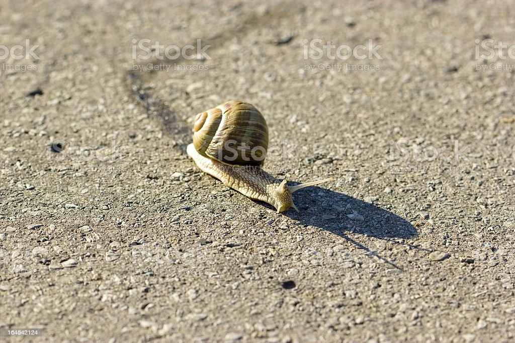 Left or right - slowly but surely (snail) stock photo