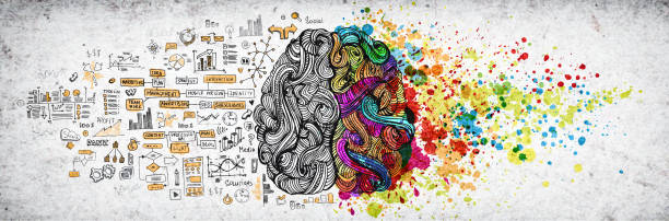 left right human brain concept, textured illustration. creative left and right part of human brain, emotial and logic parts concept with social and business doodle illustration of left side, and art paint splashes of the right side - creative стоковые фото и изображения