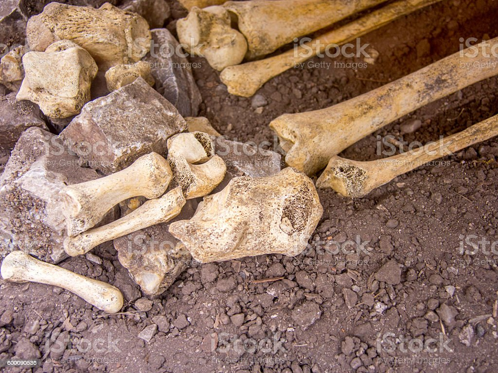 leg bones from a human skeleton unearthed stock photo
