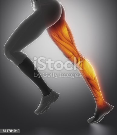 istock LEg female muscle anatomy lateral view 611784942