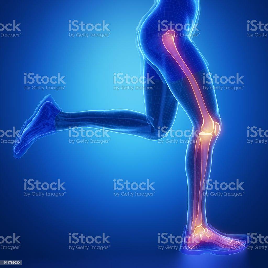 Leg joint anatomy stock photo