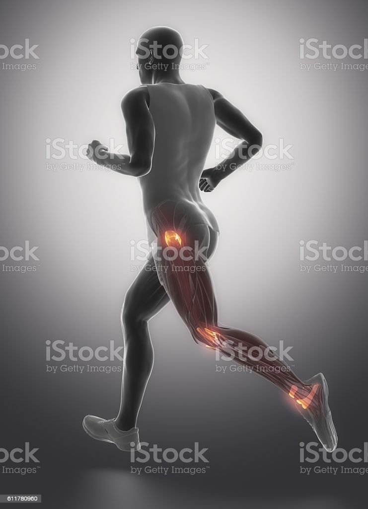 Leg Ligaments Human Connective Tissue Anatomy Stock Photo More