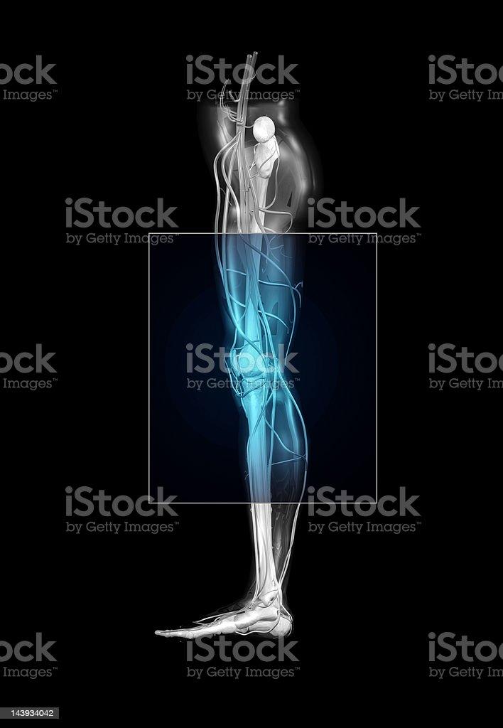 Leg Mri Stock Photo & More Pictures of Anatomy | iStock