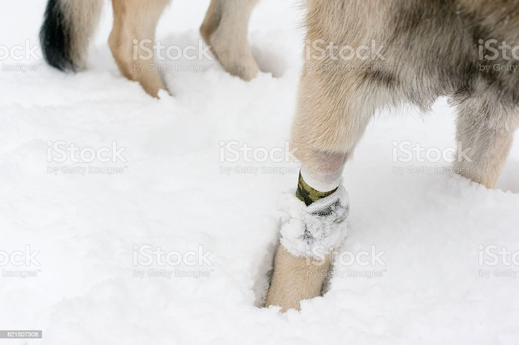 Leg Of A Dog foto stock royalty-free