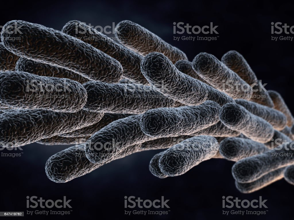 Legionella Pneumophila Bacteria stock photo