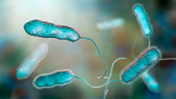 Legionella pneumophila bacterium, the causative agent of Legionnaire's disease stock photo