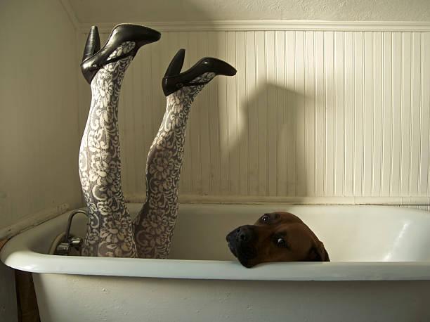 beine hund bad - hunde strumpfhosen stock-fotos und bilder