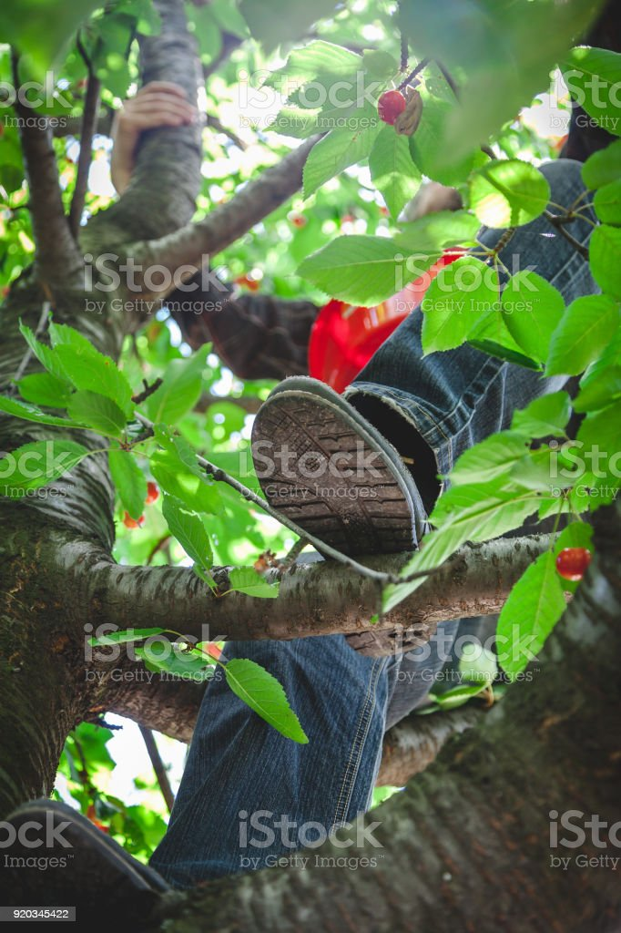 Legs in shoes on branch of tree with green foliage stock photo