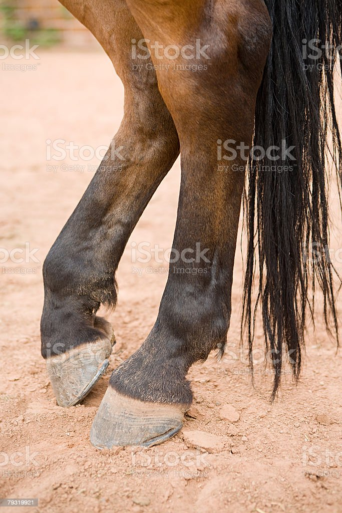 Legs of a horse royalty-free stock photo