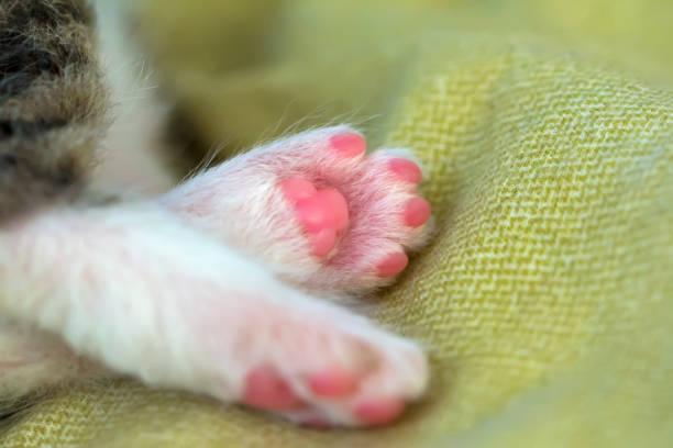 Legs of a little kitten picture id962492034?b=1&k=6&m=962492034&s=612x612&w=0&h=w9khhm2gt3yxazltelc7g0kgmoqjwayj4x896haotdy=
