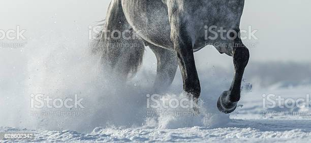 Legs of horse close up in snow picture id628602342?b=1&k=6&m=628602342&s=612x612&h=zudho 0td1el0f7vhk9r8etzbicrxb41ryygesmdfdc=