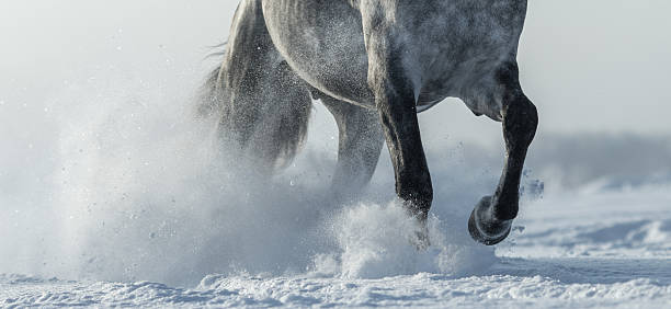 Legs of horse close up in snow – Foto