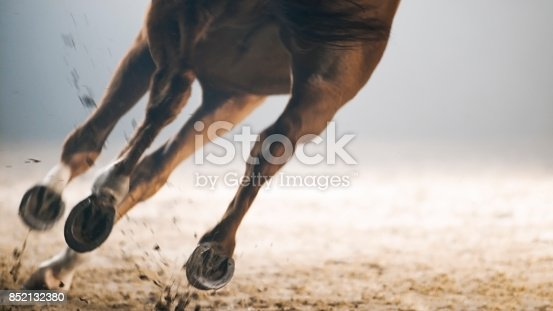 Legs of horse running on landscape.