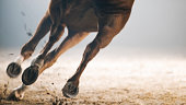 istock Legs of horse running 852132380