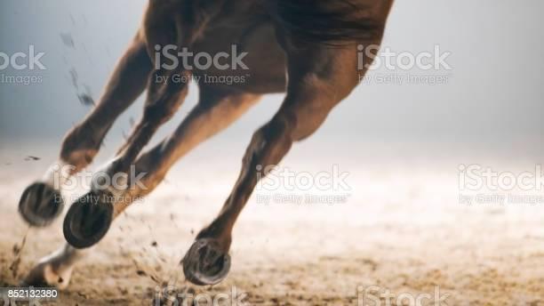Legs of horse running picture id852132380?b=1&k=6&m=852132380&s=612x612&h=wp6zzj637olygt6tkf4nugyhlpgp  djgg9yaliavv0=