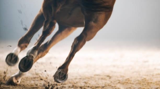 Legs of horse running picture id852132380?b=1&k=6&m=852132380&s=612x612&w=0&h=ezlws0mrwwhufiwl2hteou0kyzz1o4n7j8ynktsd7ki=
