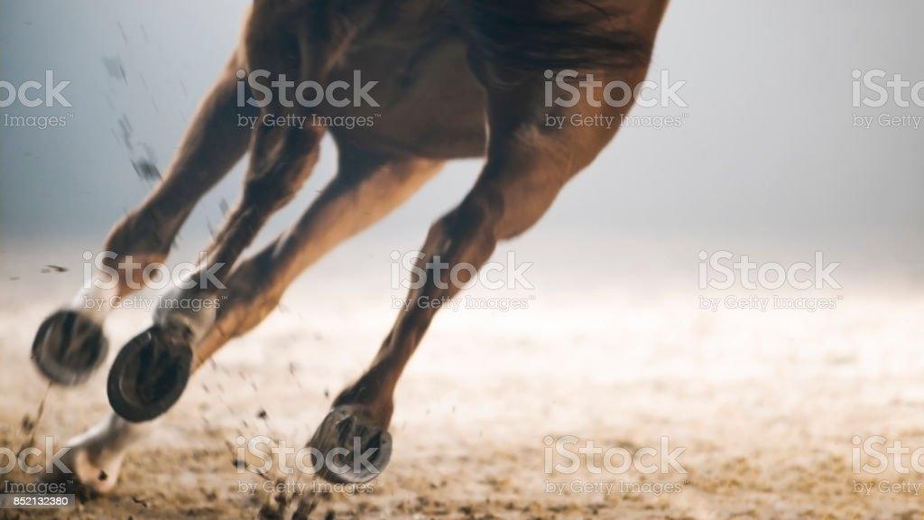 馬ランニングの足 ストックフォト