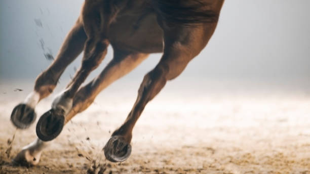 Legs of horse running Legs of horse running on landscape. working animal stock pictures, royalty-free photos & images