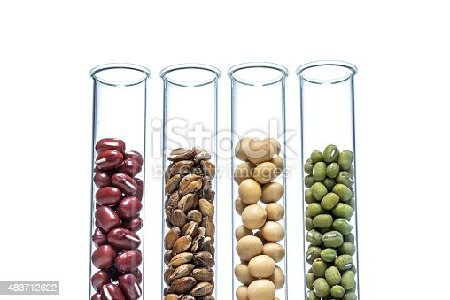 891126108istockphoto Legume with Wheat genetically modified, Plant Cell 483712622