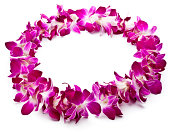 Pink orchids  isolated on  white