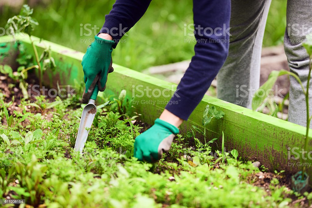 leisure activity in the garden stock photo