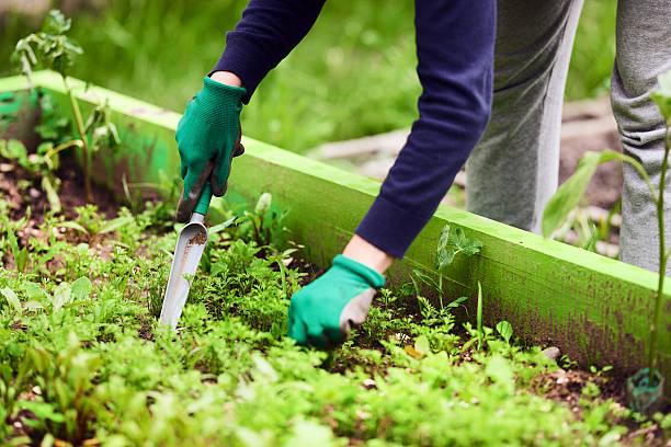 leisure activity in the garden - wieden stockfoto's en -beelden