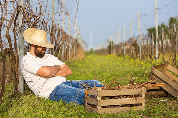 leisure time in vineyard - Photo