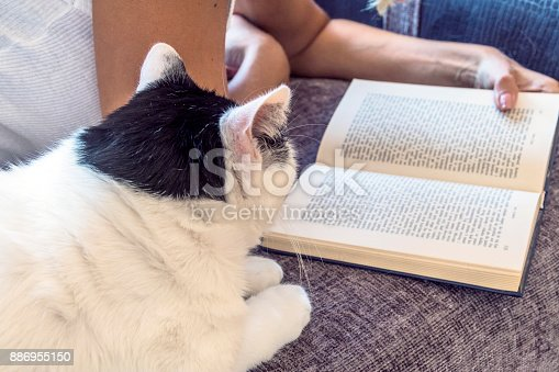 istock Leisure time with a cat 886955150