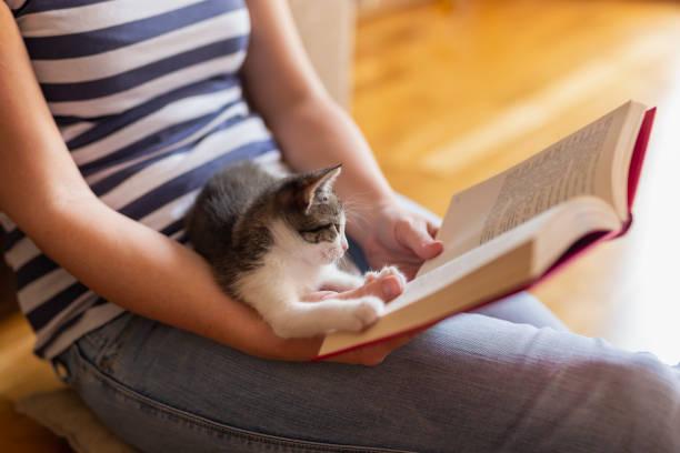 Leisure time with a kitten picture id1167784576?b=1&k=6&m=1167784576&s=612x612&w=0&h=xlorjm5unp4tmi6njrhps prg3gz39vurbvctvkhavm=