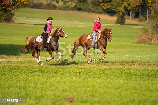 two happy women leisure riders on their beautiful horses riding together in gallop outdoors over meadow on sunny day in autumn