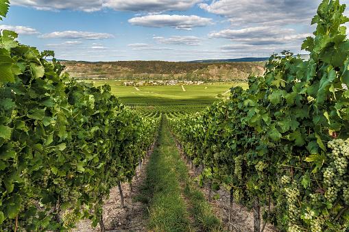 Leiwen at the Moselle Rhineland-Palatinate Germany