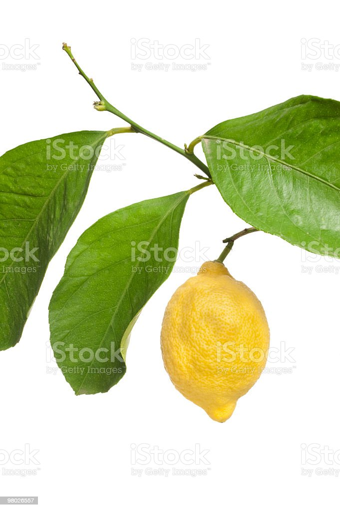 Lemon and branch on white royalty-free stock photo