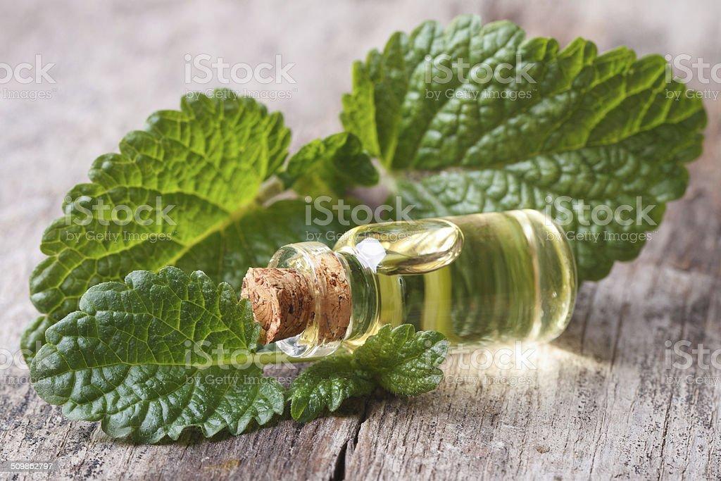 Melissa foglie primo piano con una bottiglia di olio - foto stock